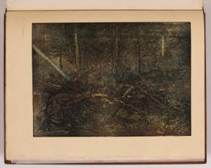 Les v Podroklaní
