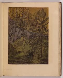 Zimní večer v lese