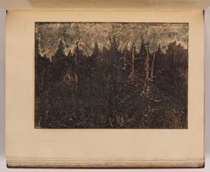 Mrtvý les