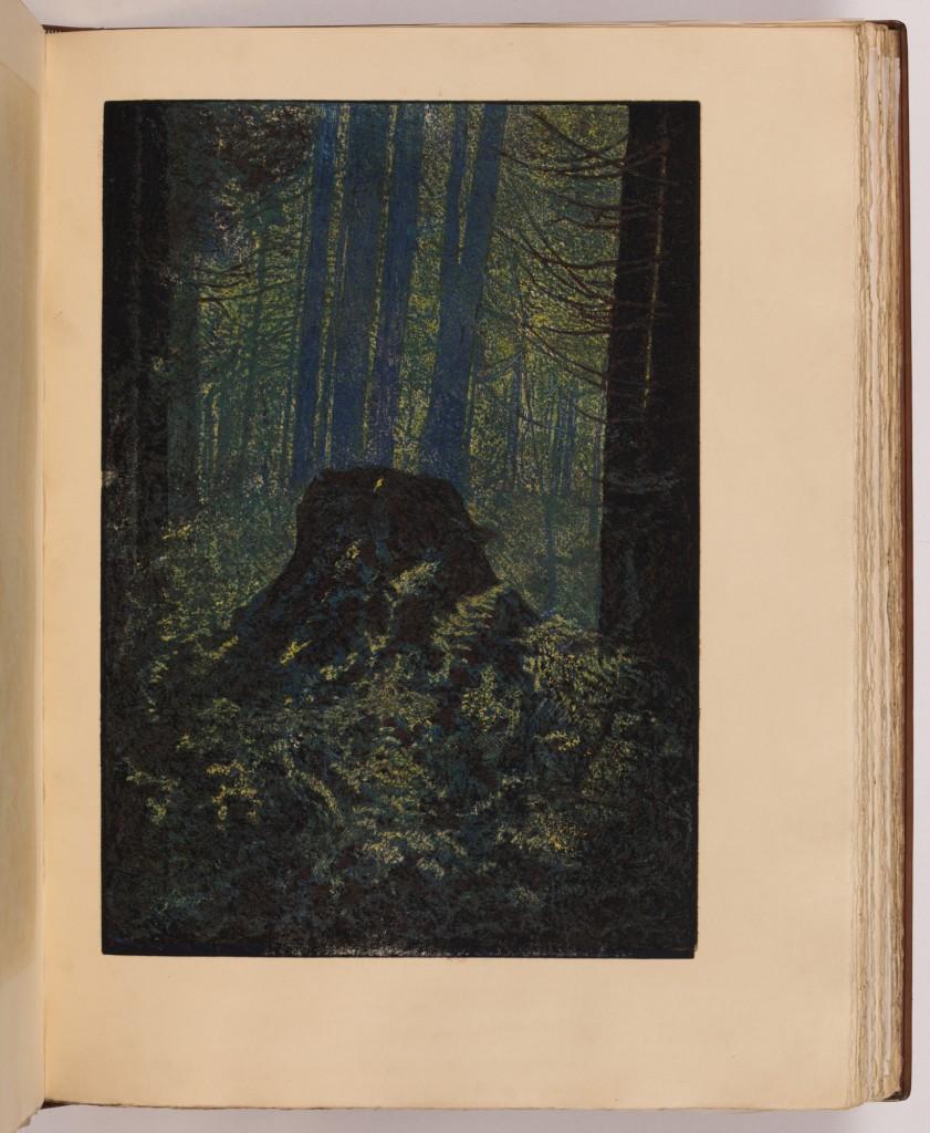 Zbytky pralesa v Gayerruck